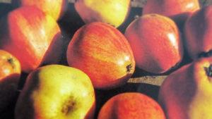 Chucklehead Cider Apples